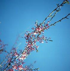 春の芽吹には青空が似合う