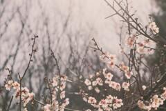 それでも春は来る【其の弐】