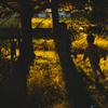 秋の光と影の交わるとき