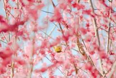 それでも春は来る【其の四】