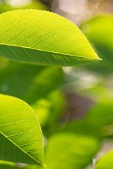 【ご報告】新緑の候…