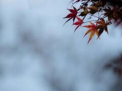 去りゆく秋を惜しんで