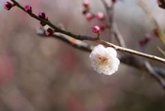 それでも春は来る【其の壱】