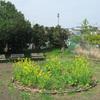 菜の花サークル