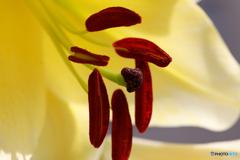 庭の花37