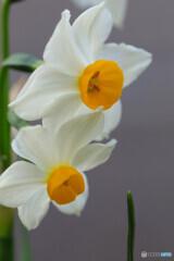 庭の花10
