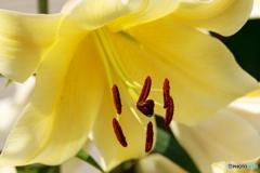 庭の花36