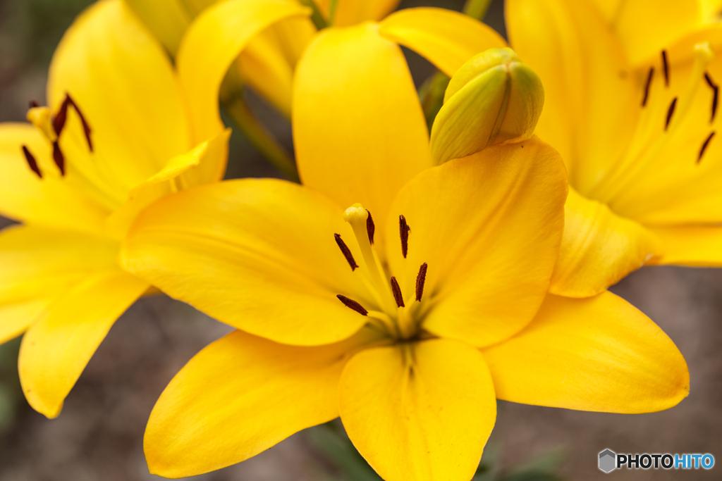 公園の花16