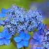 庭の花28