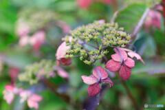庭の花52
