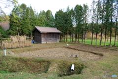 稲作発祥の地