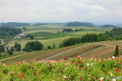 美瑛色彩の丘