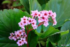 庭の花40