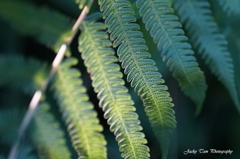 ライトグリーンの葉