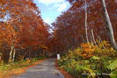 赤い葉の道