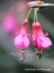 鏡の花と蜂