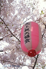 桜満開の思い出@北上展勝地