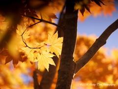 秋の呼び声