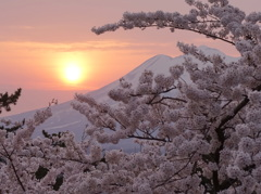 弘前桜の夕日