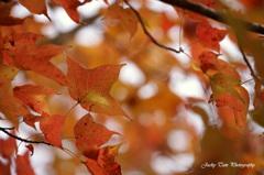 秋の色@香港