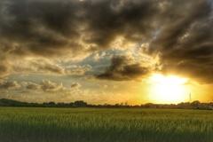 田園の夕景