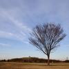 大草原の木