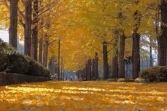晩秋~移り行く季節