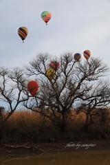 突然の熱気球