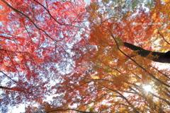 秋盛る御殿山公園