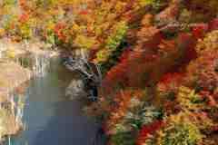 秘境の秋彩