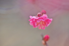 咲いてる。。。