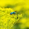 幸せの青い蜂