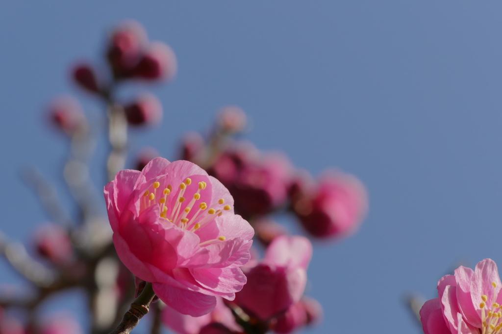 春色 ぽっ♡