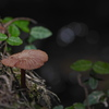 ひっそり森のキノコ(3)