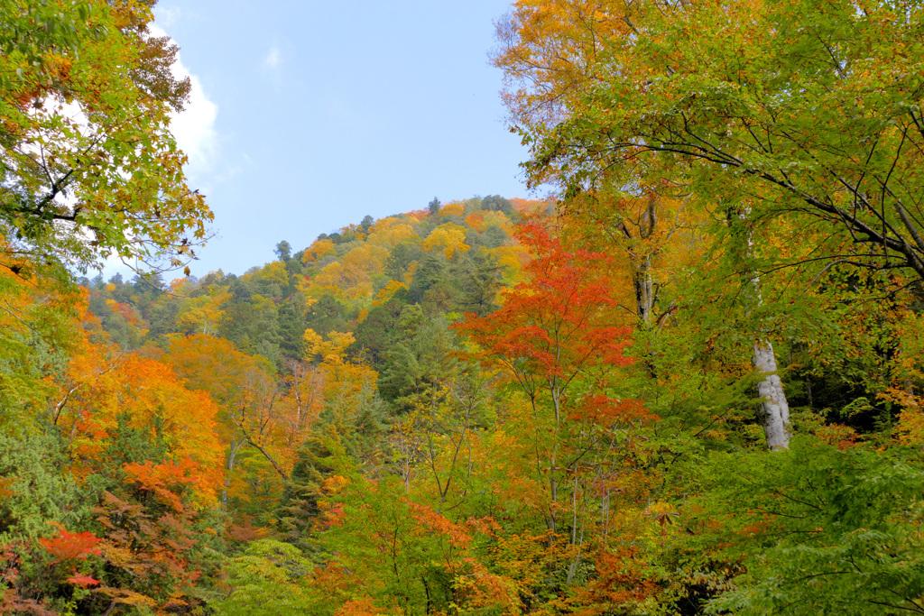 山の紅葉 (2)