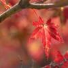 虎渓山の紅葉(2)