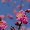 春色 ぽぽぽ♡