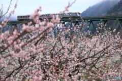 最後の春3