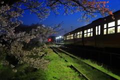 桜の志和地駅3