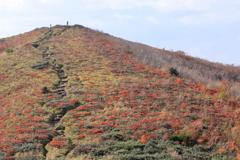 紅葉の比婆山