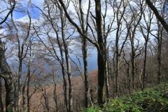 秋色のブナ林