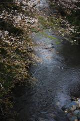 晩春の小川