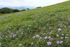 高原の山野草2