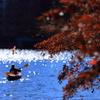秋色 光の中へ