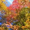 色彩 照葉峡 2