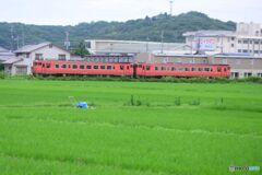 桃太郎線 たらこ列車