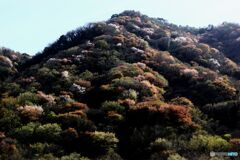 山の風景(1)