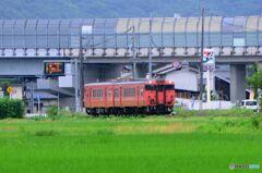 桃太郎線 たらこ列車(1)
