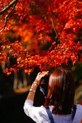 河口湖で紅葉狩り~もみじ回廊 ⑤
