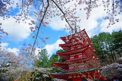 桜と朱色の忠霊塔 with many pieple